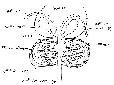 http://www.dermatologyinfo.net/arabic/images/photo2b.jpg